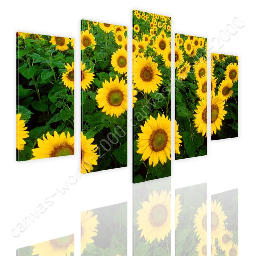 CANVAS (Rolled) Sunflower Field Split 5 Panels 5 Panels Wall Art ...